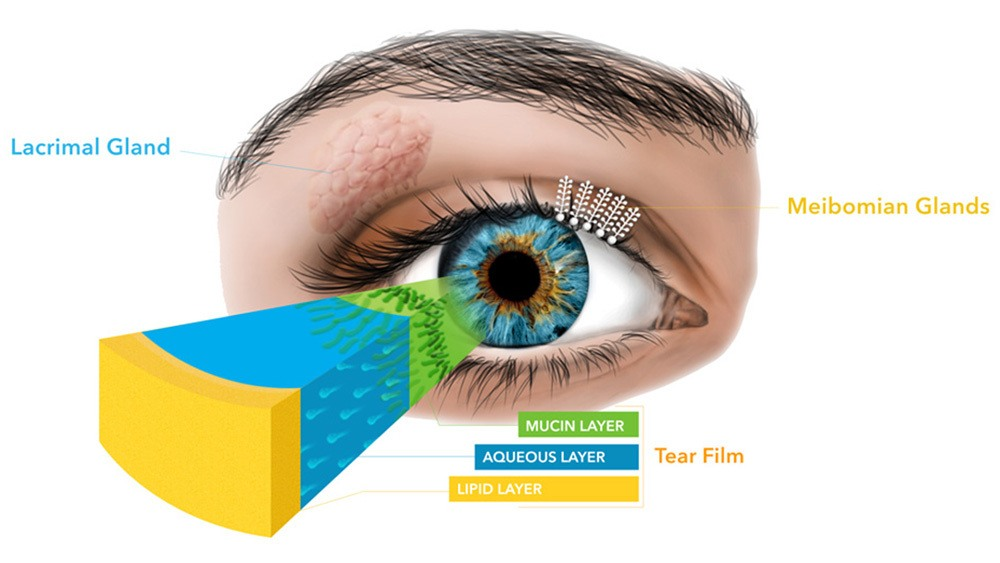 Visual chart of tear film layers of the eye.
